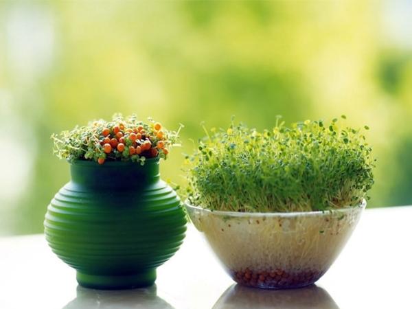 Người mạng Thủy nên để cây gì trên bàn làm việc - cây mầm xanh
